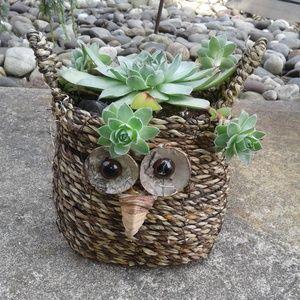 Other - Boho Wicker Owl Planter Basket